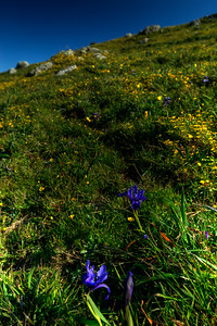 © Joseph Dougherty. All rights reserved.  Douglas Iris, California Buttercups, Goldfields, and other wildflowers dot the hillsides of Point Reyes National Seashore
