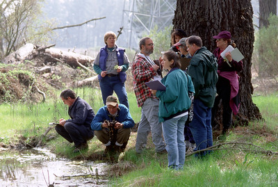 © Joseph Dougherty. All rights reserved.   Group of high school science teachers studying vernal pools on EBMUD-sponsored weekend field trip.