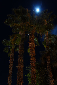 © Joseph Dougherty. All rights reserved.   A full moon shines down on tall palm trees at night.