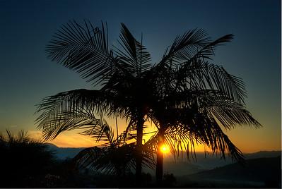 Sunrise through palm tree.