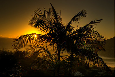 © Joseph Dougherty. All rights reserved.   Sunrise through palm tree.