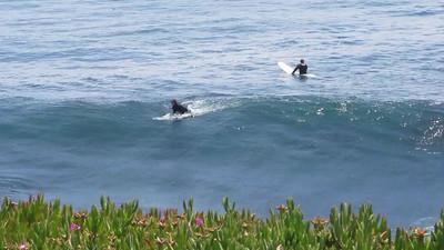 Santa Cruz 2011
