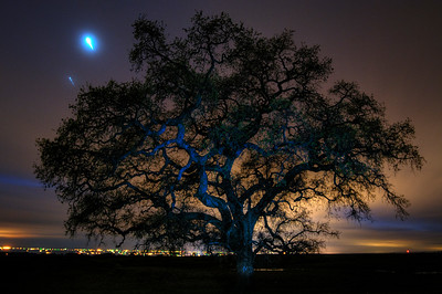 © Joseph Dougherty. All rights reserved.   A massive lone oak tree, in silhouette against the lights of the Central Valley.  Venus and Jupiter are seen just above the tree. The long exposure reveals their rotation in the night sky.