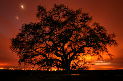 © Joseph Dougherty. All rights reserved.   A massive lone oak tree, in silhouette against the lights of the Central Valley.  Venus and Jupiter are seen just above the tree. The long exposure reveals their movement in the night sky.