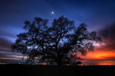 © Joseph Dougherty. All rights reserved.   A massive lone oak tree, in silhouette against the lights of the Central Valley.  Venus and Jupiter are seen just above the tree.