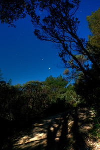 © Joseph Dougherty. All rights reserved.   Moon shadows on the trail to Feather Falls during a night hike.