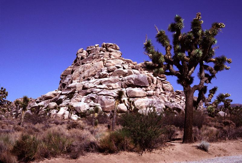 Rock Formation Joshua Tree National Park
