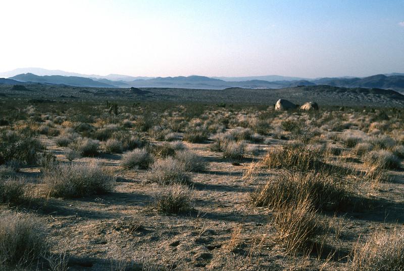 Desert landscape California