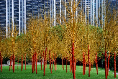 Orange and Yellow trees, Chicago 2010