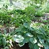 Crabapple Shade Planting