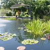 Main display Pond