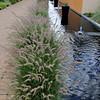 Denver Botanic Garden.