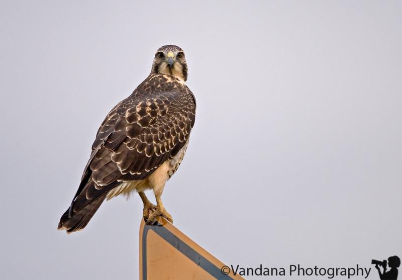 In Las Vegas National Wildlife Refuge, NM
