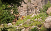 More elk - a bull elk and his kid on a trail to Alberta Falls, Rocky Mountain National Park -