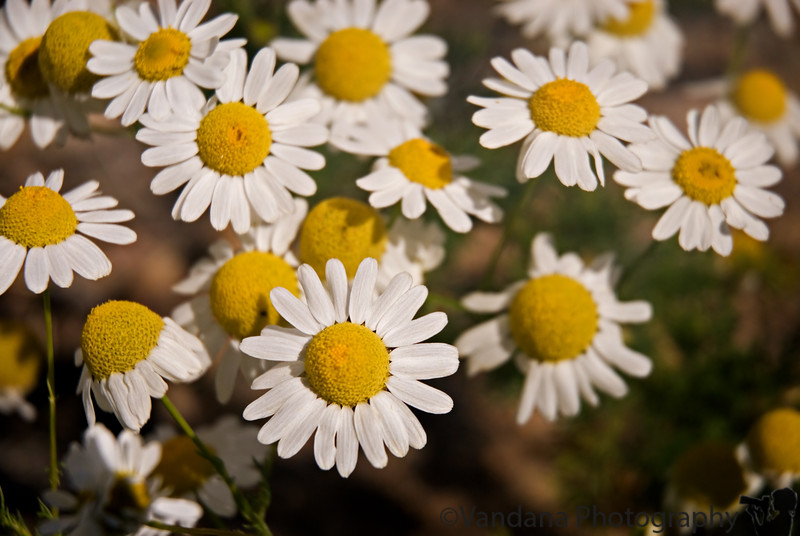 Grand Lake and Arapaho National Recreation Area, flowers and more flowers