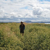 Tule Lake Wildlife Refuge <FONT SIZE=1>© Chiyoko Meacham</FONT>