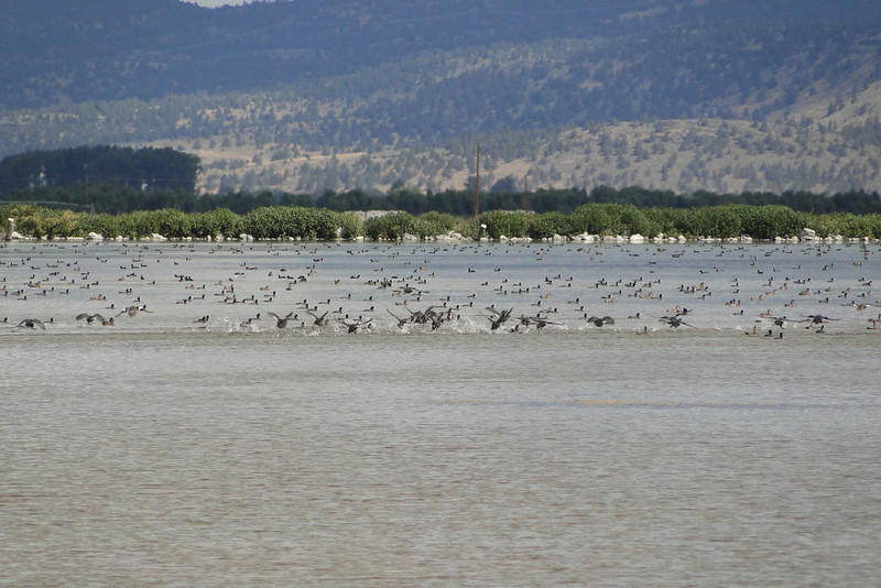 Tule Lake Wildlife Refuge