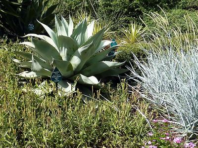 Dallas Arboretum and Botanical Gardens 2011