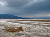 A dry bush in a salt flat in Death Valley after a rainfall