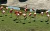 Day 3:  2008-04-11<br /> <br /> Busch Gardens<br /> <br /> .