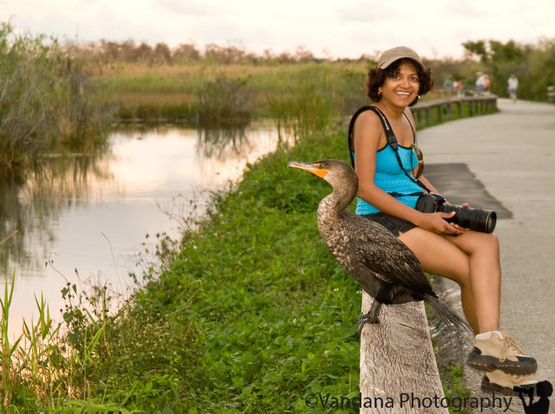 V and other animals, Anhinga Trail, Everglades National Park, Florida