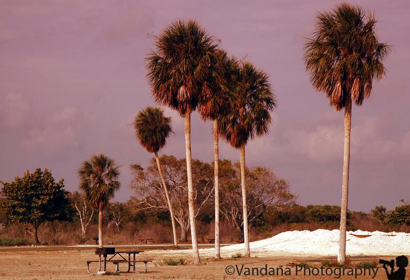 evening at Flamingo, Fla
