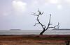 Florida bay - note tiny bald eagle on tree !