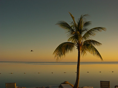 Sundown pelican - Florida Keys