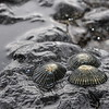 © Joseph Dougherty. All rights reserved.  Rocky intertidal zone.