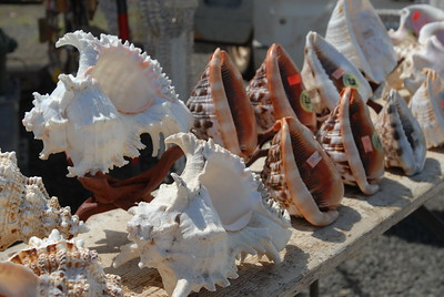 © Joseph Dougherty. All rights reserved.   Large decorative sea shells for sale.   Roadside curio stand near Haleiwa, north shore of Oahu.