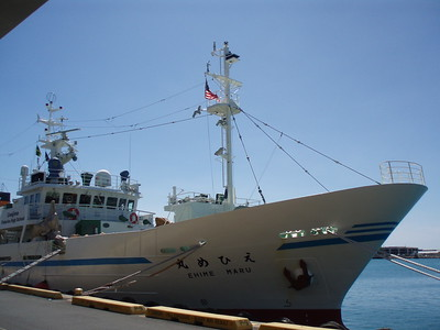 © Joseph Dougherty. All rights reserved.  Japanese fisheries training vessel  EHIME MARU.