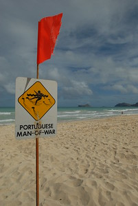 © Joseph Dougherty. All rights reserved.  Warning sign about stinging jellyfish informs swimmers and waders of the risk of Portuguese Man-of-War jellies.    The beach at Bellows Air Station.  Oahu, Hawaii.