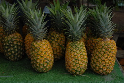 © Joseph Dougherty. All rights reserved.  Pineapples.