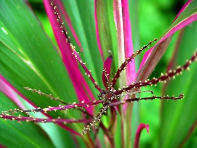 Flower, Waimea Hawaii