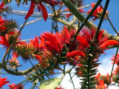 Hawaiian Flower, Waimea