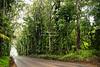 Tunnel of Trees on Kauai