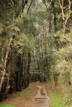 Trail to the Kalalupapa Overlook