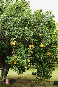 Yellow balloon tree
