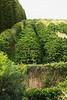 Coffee plantation on Molokai Island