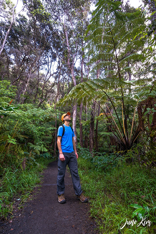 Jungle-like walking trails around the volcanoes