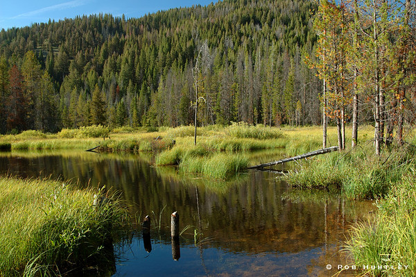 Swamp area in the Sawtooth Mountains.