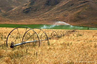 Agriculture in the Sawtooths. Irrigation equipment in a wheat field in the Sawtooth Mountains, Sawtooth National Recreation Area, Idaho. HDR © Rob Huntley