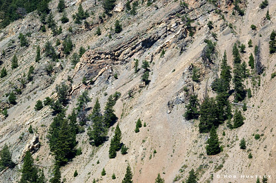 Steep hillside with trees and vegetation clinging to the loose stone surface. Sawtooth Mountains, Sawtooth National Recreation Area, Idaho. © Rob Huntley