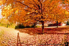 October 27, 2010 -the end of Fall <br /> <br /> 40F and very windy, winter is coming, coming...