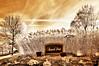November 6, 2010 - Introducing Regents Park in IR