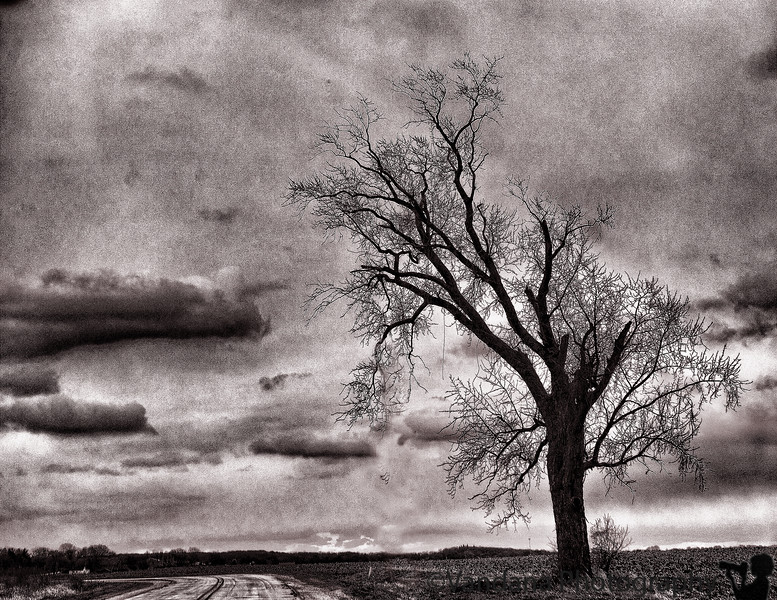 November 24, 2010 - another lone tree !<br /> <br /> Happy thanksgiving, everybody !