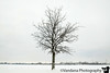 January 26, 2019 - Lone tree