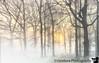 April 13, 2020 - Misty morning