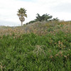 JalamaFoliage