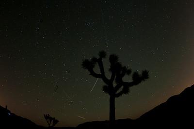 Joshua Tree night sky